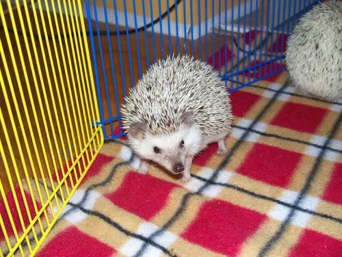 Voici Pixie ! 102_1379