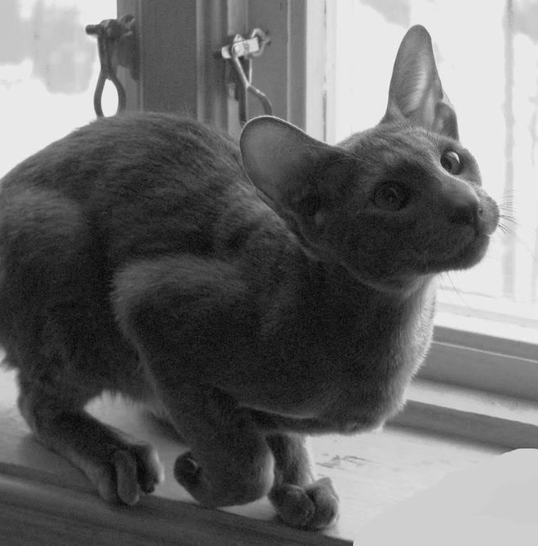 Kattene i Korketrekkeren - Page 9 Forelskakatter026-1