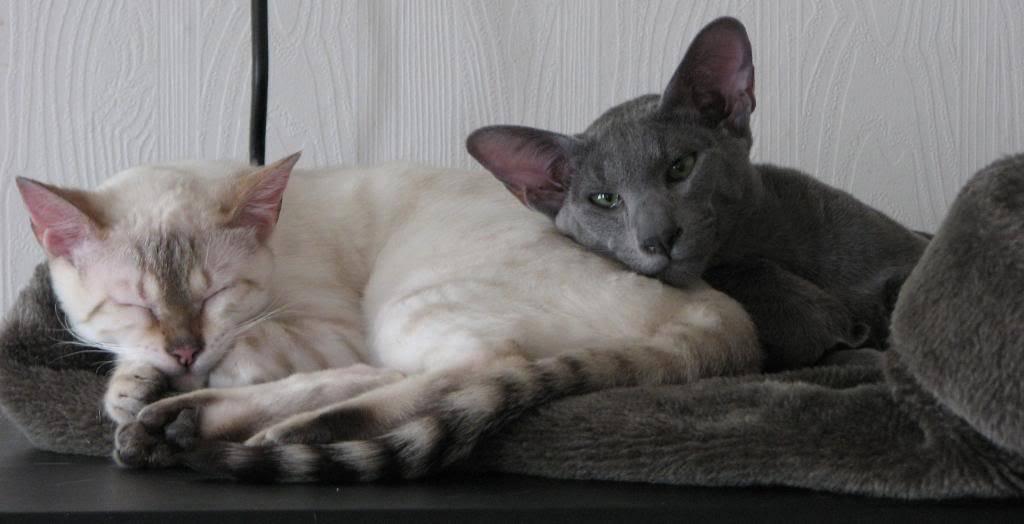 Kattene i Korketrekkeren - Page 9 Kaatter003