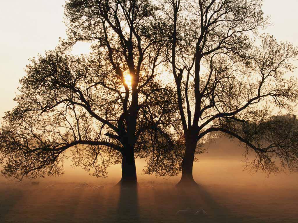 Árvores - Nossos baixos antes de tomar forma GoogleDesktopPhotosPluginWallpaper