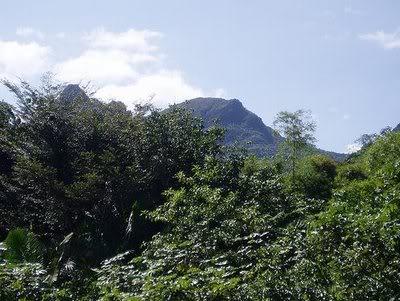 Viajes y turismo, Puerto Rico Parquenacionalelyunque