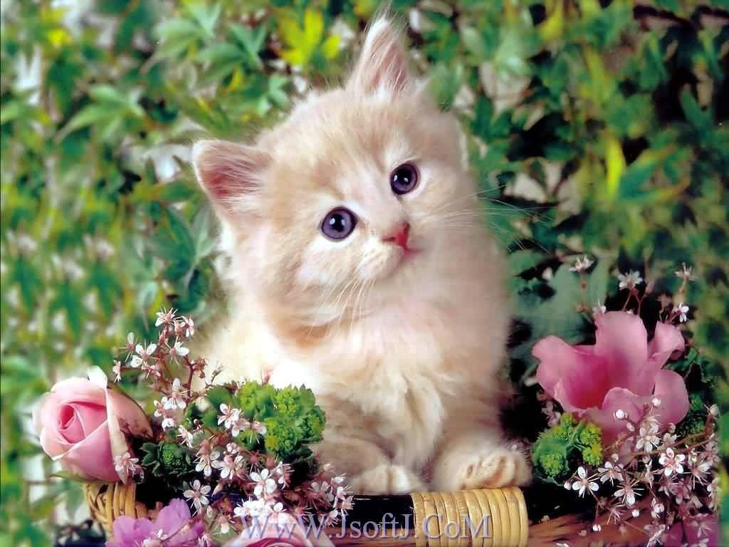 صور اجمل قطط Cat_wallpapers-014