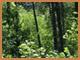 Regenwouden van Quetzalcoatl