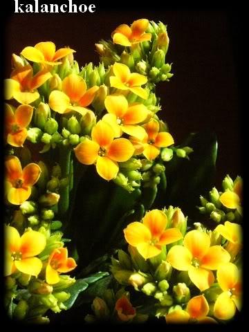 Visite chez Cactus Fleuri 23 mars 2008 010-2