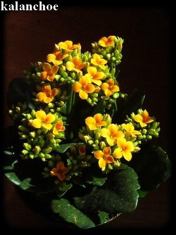 Visite chez Cactus Fleuri 23 mars 2008 012