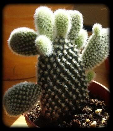 Visite chez Cactus Fleuri 23 mars 2008 031-1