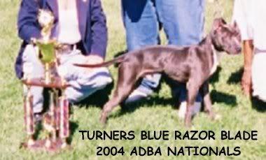 RIP - Turner's Tinker Bell BLADENATS1