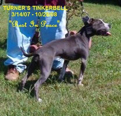 RIP - Turner's Tinker Bell Tinkerbell
