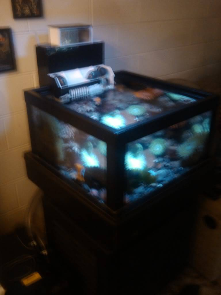 My friends new coldwater tank. IMG_20110623_184439