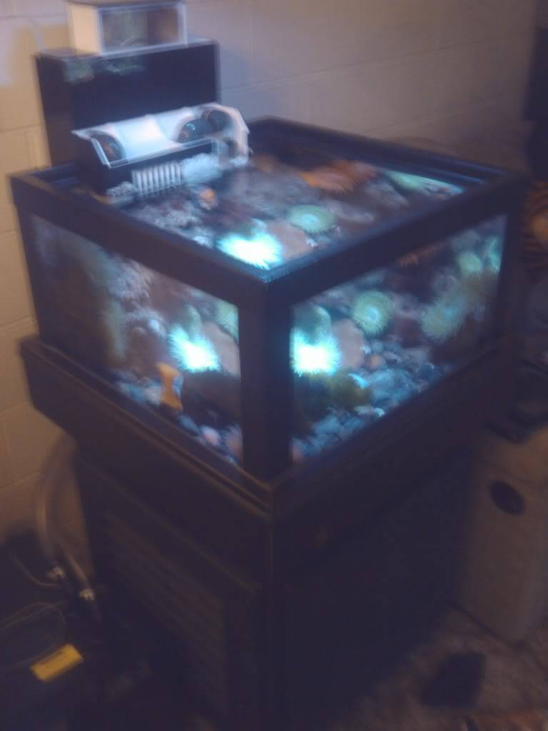 My friends new coldwater tank. IMG_20110623_184450