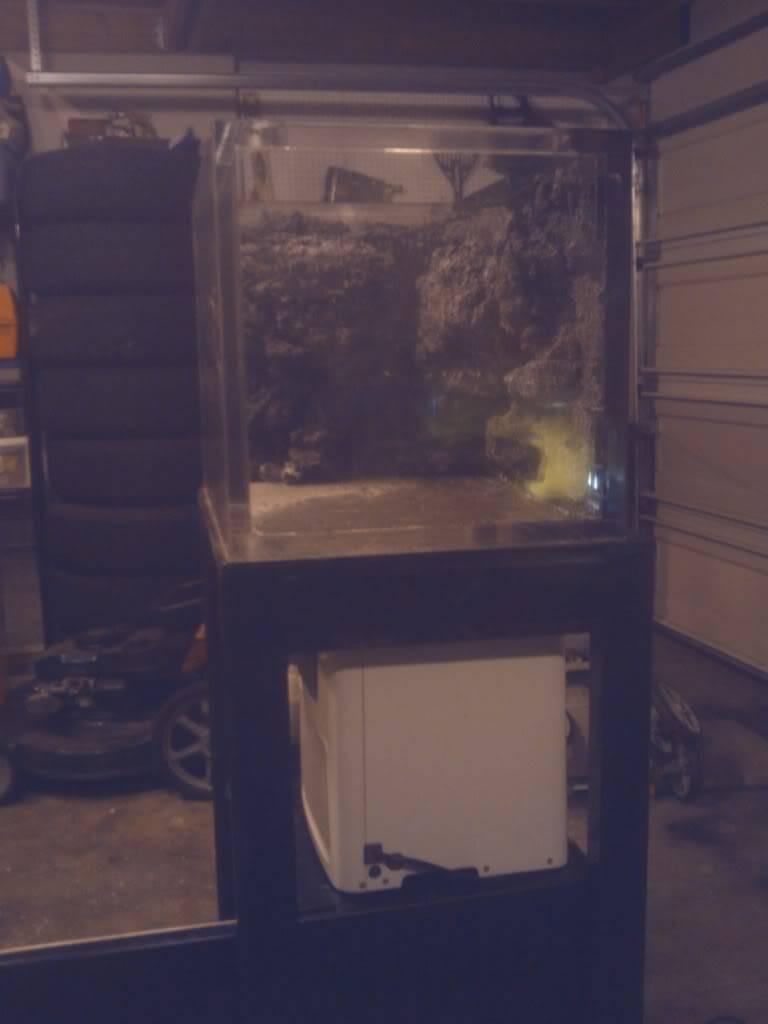 Northeast Pacific Bay Pipefish Tank IMG_20120306_001809