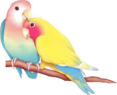 العاشقون صنوف.. أي العاشقين أنت؟ LoveBirds