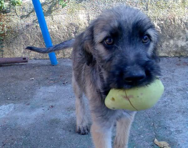 Panchito, cachorrete simpatico y salao (Talavera) Imagen250