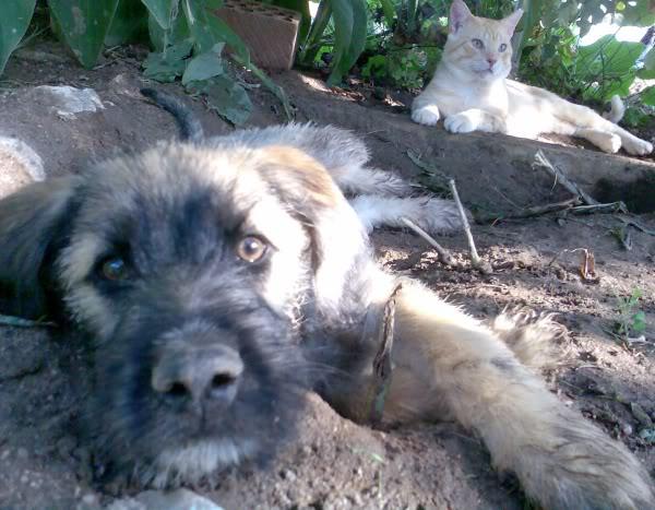 Panchito, cachorrete simpatico y salao (Talavera) Imagen374