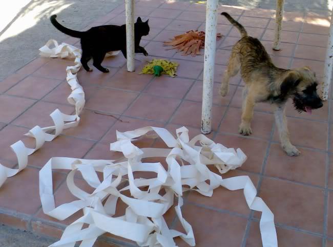 Panchito, cachorrete simpatico y salao (Talavera) Imagen381