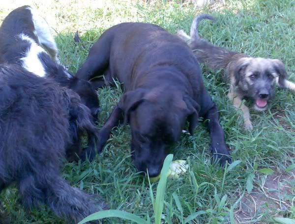 Panchito, cachorrete simpatico y salao (Talavera) Imagen389