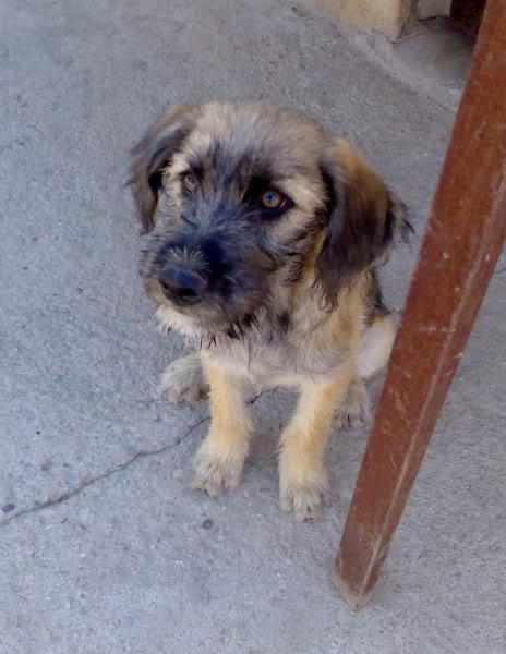 Panchito, cachorrete simpatico y salao (Talavera) Imagen408