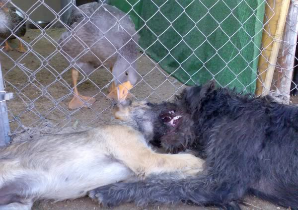 Panchito, cachorrete simpatico y salao (Talavera) Imagen430