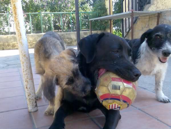 Panchito, cachorrete simpatico y salao (Talavera) Imagen460