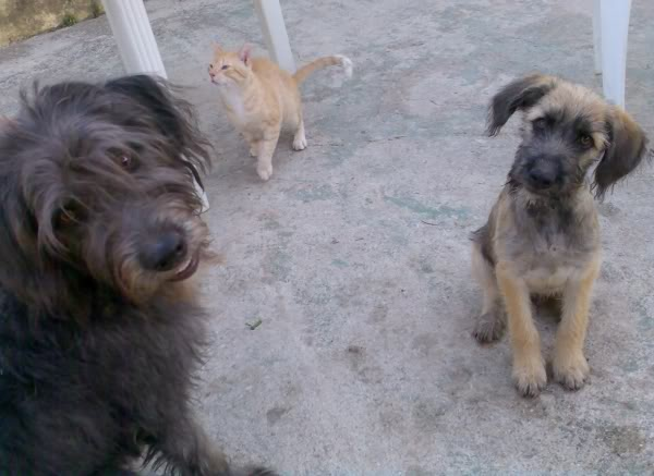 Panchito, cachorrete simpatico y salao (Talavera) Imagen503