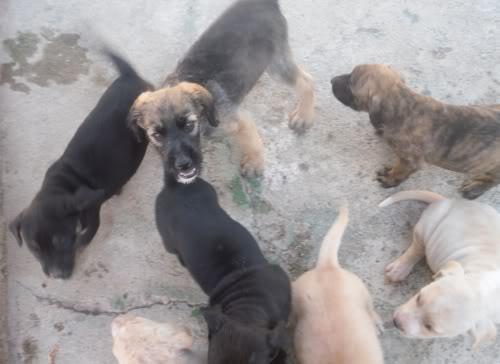 Panchito, cachorrete simpatico y salao (Talavera) Pn
