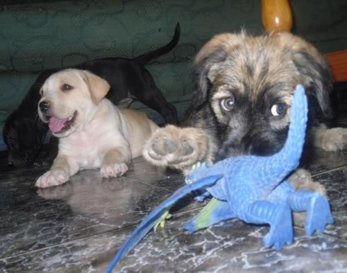 Panchito, cachorrete simpatico y salao (Talavera) Pn3
