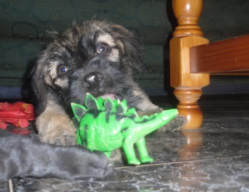 Panchito, cachorrete simpatico y salao (Talavera) Pn5