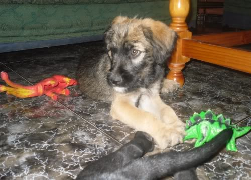 Panchito, cachorrete simpatico y salao (Talavera) Pn6