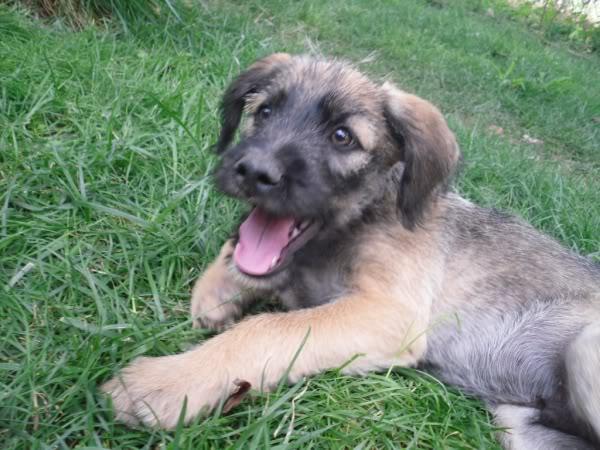 Panchito, cachorrete simpatico y salao (Talavera) Q