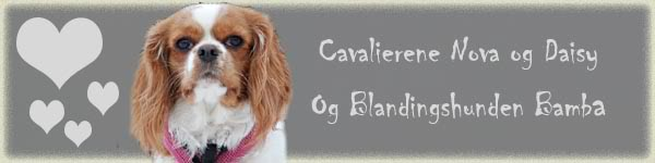 Bare en test Bannerg