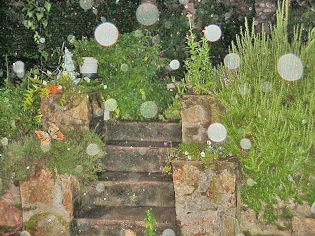 Необычные фото GardenOrbs