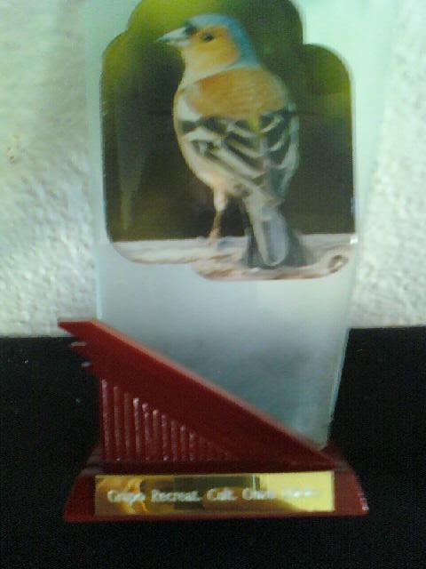 Concurso de Tentilhôes-C.R.Onze Unidos-Lisboa 130425_090524-1
