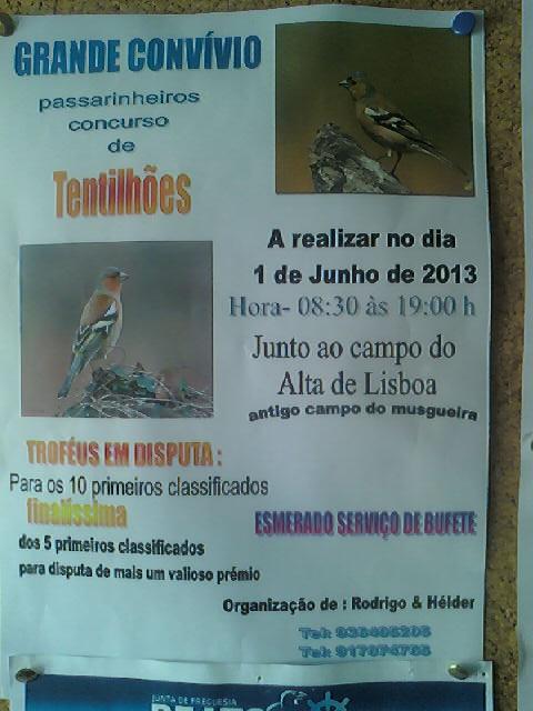 Concurso de Tentilhôes-Alta de Lisboa -2013 130514_095053