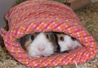 Binkies, Cuddle cups and lap pads,a s well as sleeping bags KingandPipSqueakcuddling1