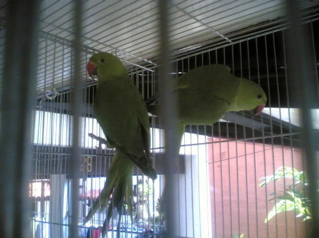 Post your favorite birds 09102007002