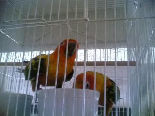 Post your favorite birds 09102007003