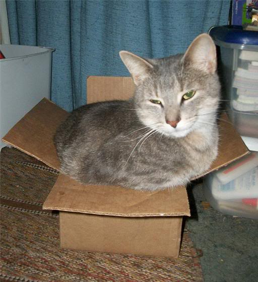 Pets - Page 8 Opie_box