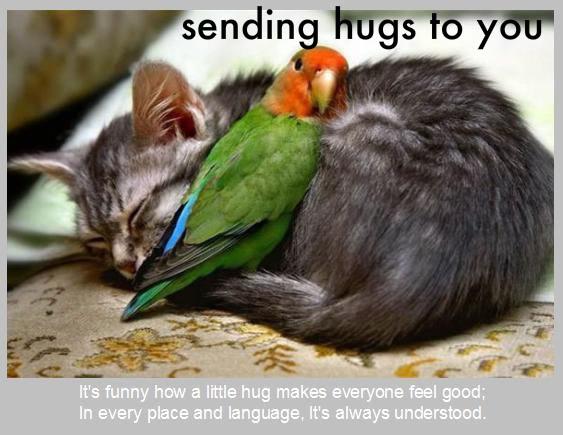 Zagrljaj Cat_and_bird_hug