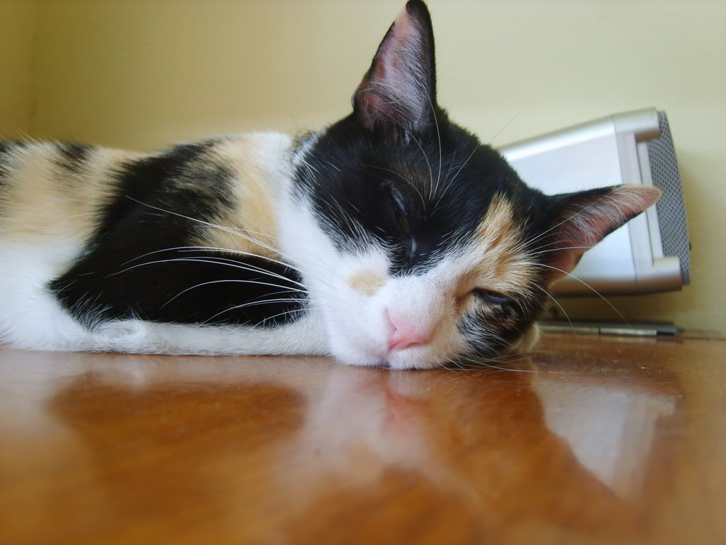 Shake - pisica noastra - Pagina 4 S8002681
