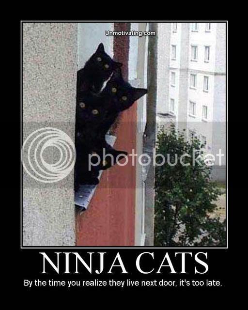 FUNNY SHIT - Page 3 Ninjacatsbz4