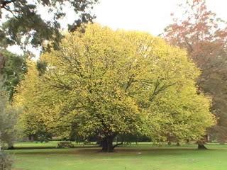 Royal Botany Garden PIC_0825-1