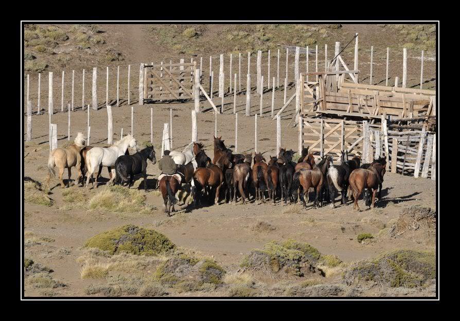 Ma maison de campagne, j'ai rentré les chevaux JPR_20080229_194807