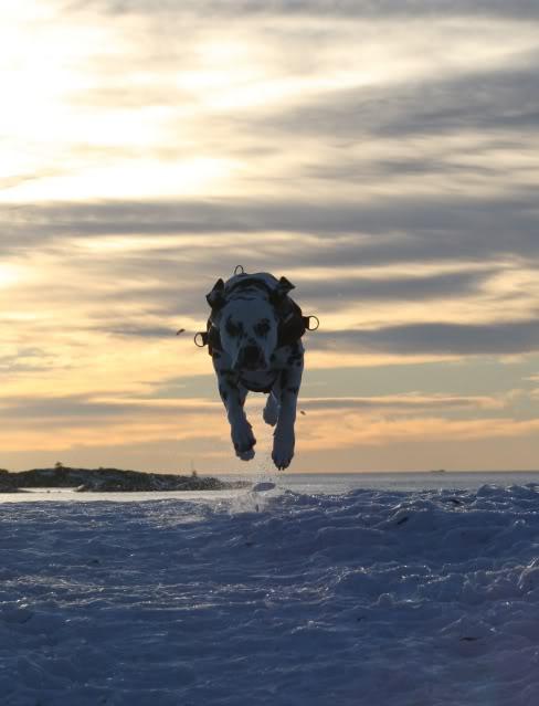 [avsluttet] Fotokonk. Februar - Lek i snø IMG_6949