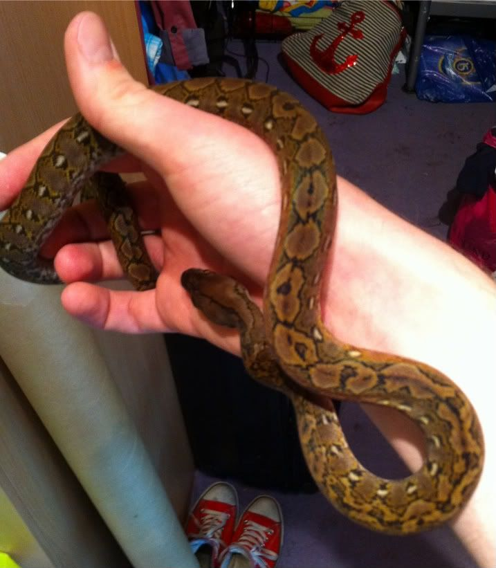 The Python side of my Reptiles... and a Boa :P IMG_0636