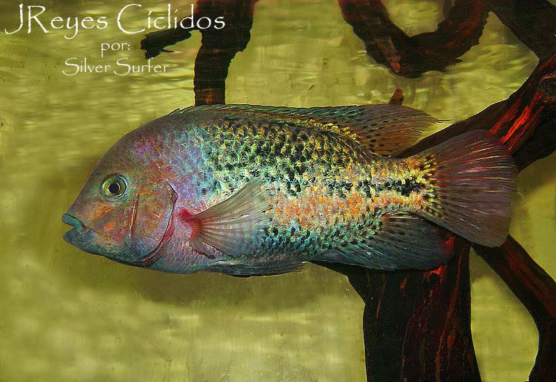 mi Quetzal disque F0  DSC08925copy2