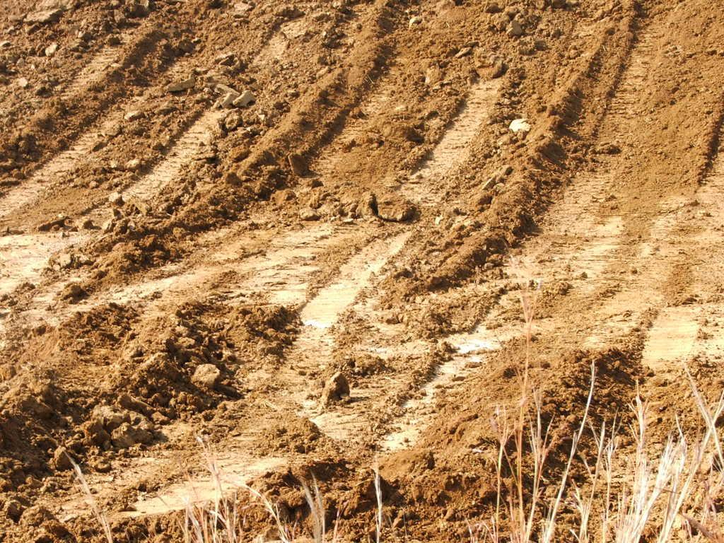 A new mud pond at Orient Koi Farm DSCF6369