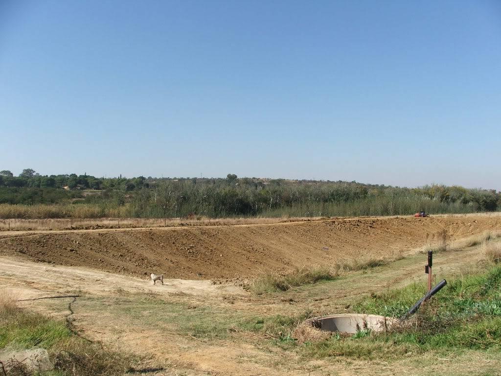 A new mud pond at Orient Koi Farm DSCF6406