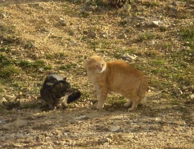 slike slatke ebanovine maca