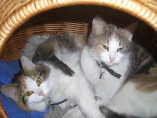 To herlige jentepuser trenger ett nytt hjem! Bilde002