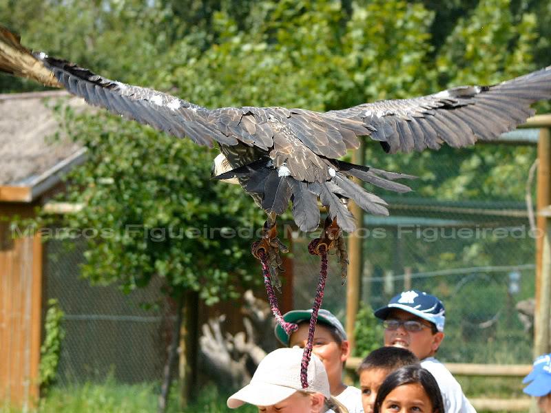 Parque e Zoo da Quinta de Santo Inácio Quinta3